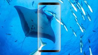 Galaxy S8 gewinnen